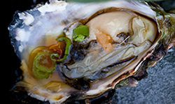 Featured Image for Kaizen Oysters